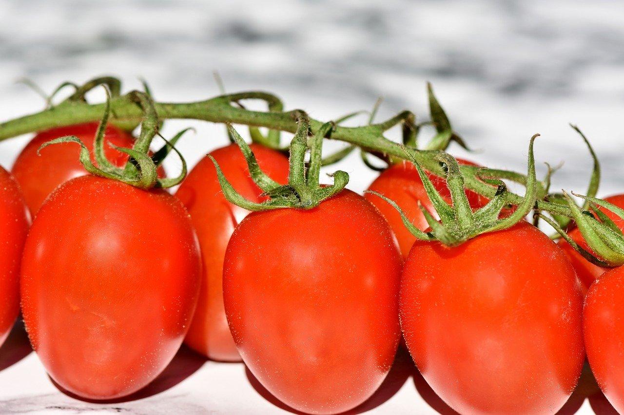 Sopa fría de tomate con aceite especiado
